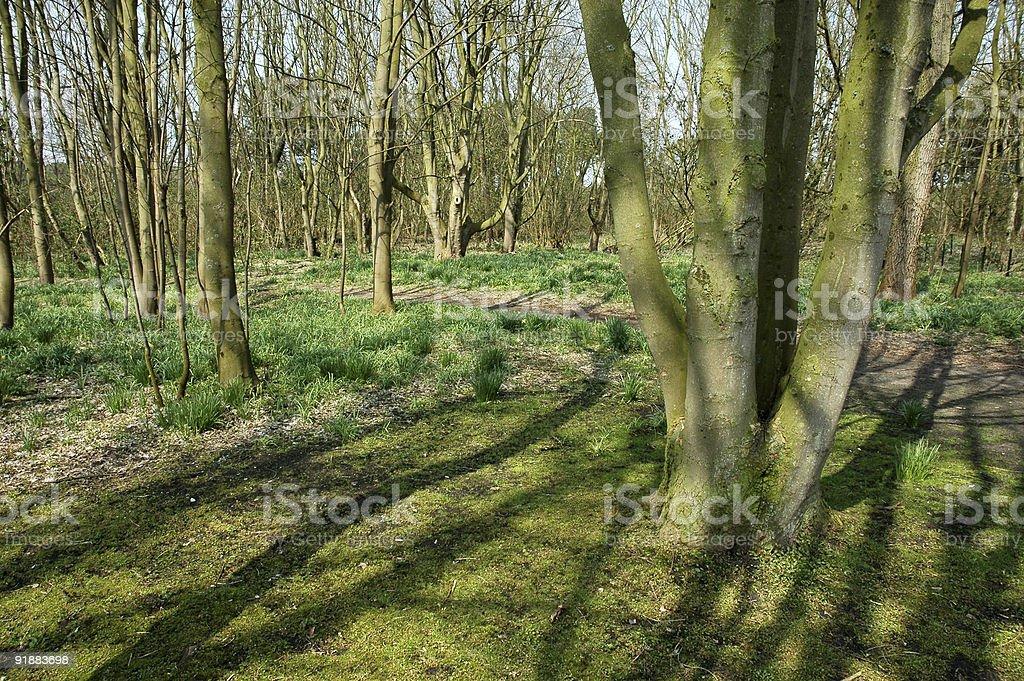 Forestscene royalty-free stock photo