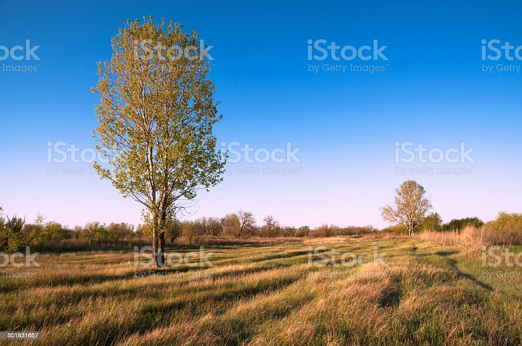 Forest-steppe. Astrakhan rerion, Russia royalty-free stock photo