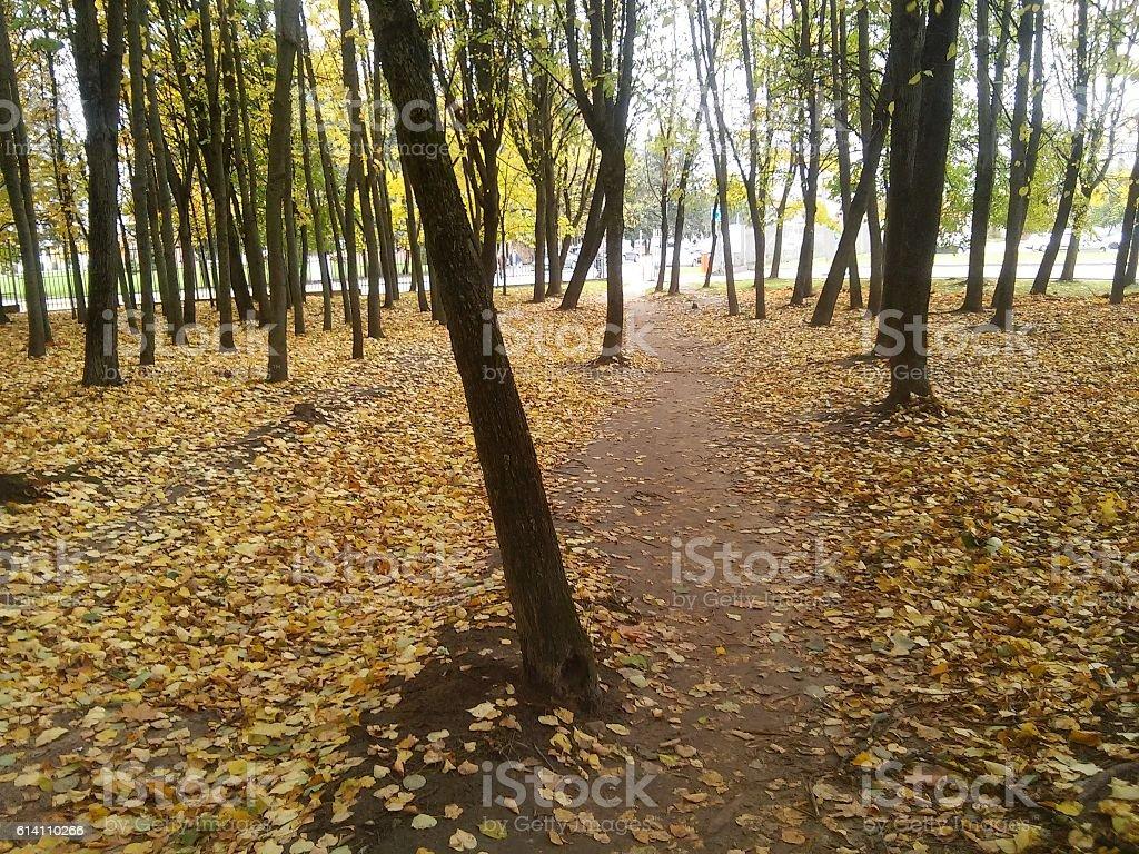 Forewalk in autumn stock photo