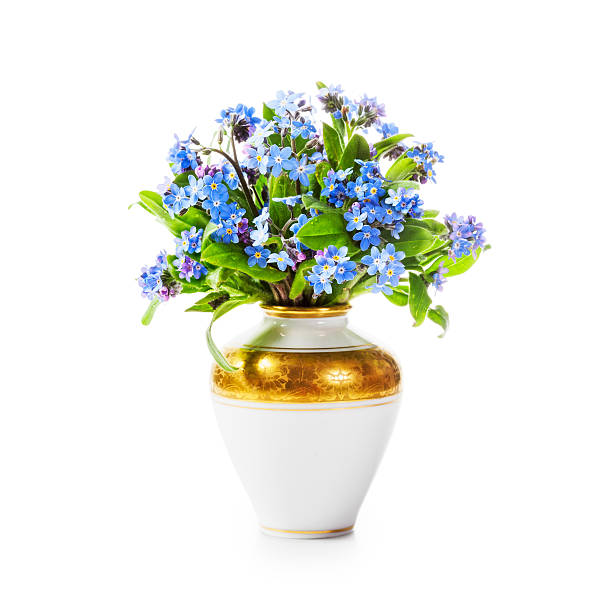 Royalty Free Forget Me Not Flowers In Vase Pictures Images And
