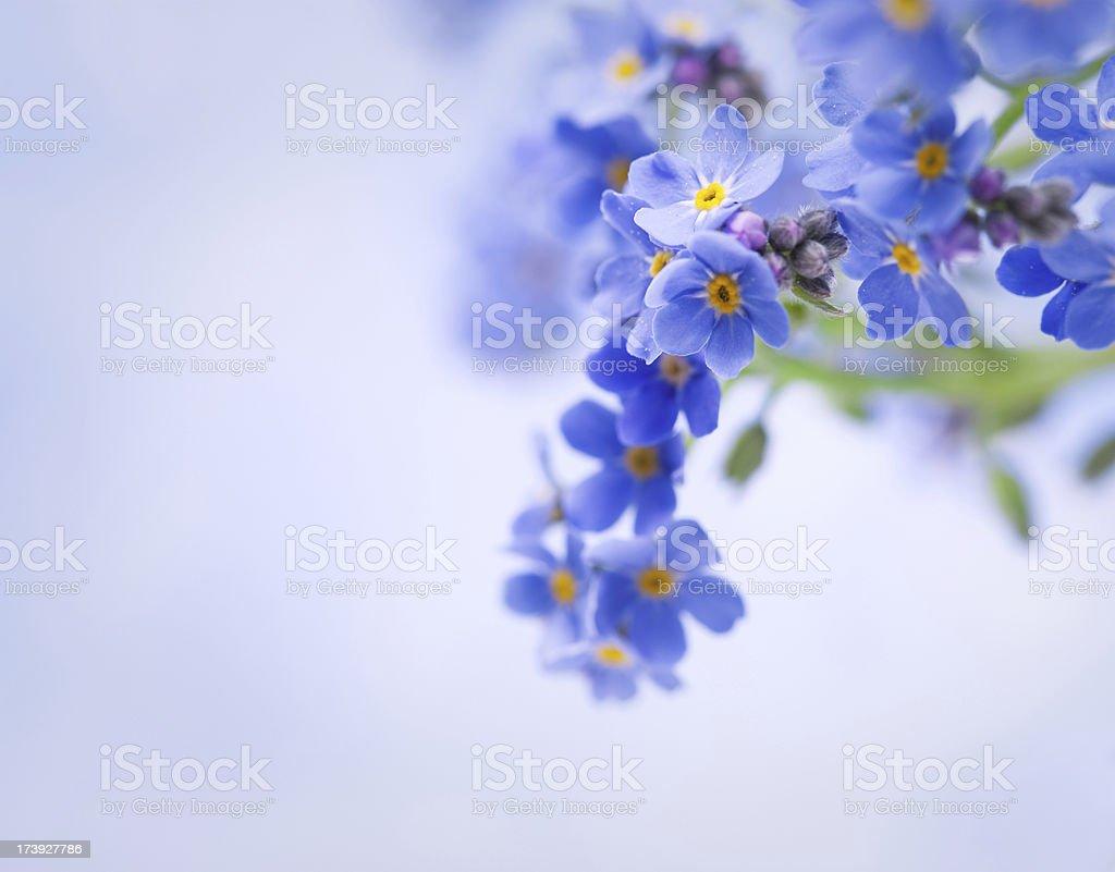 Oubliez-pas de fleurs - Photo