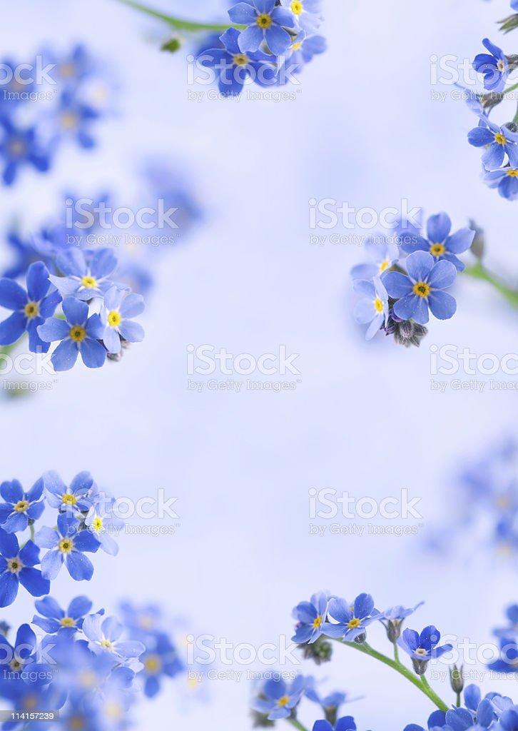 Forget Me Not Frame royalty-free stock photo