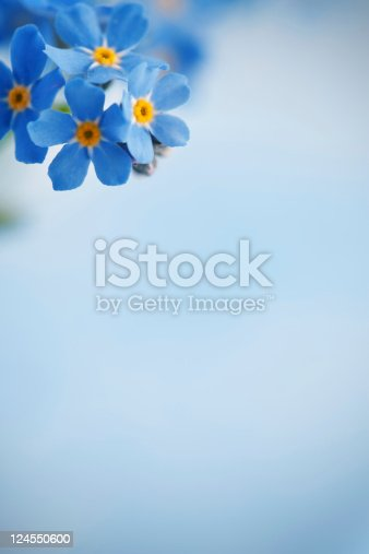 Forget me not flowers on blue background. Selective focus.