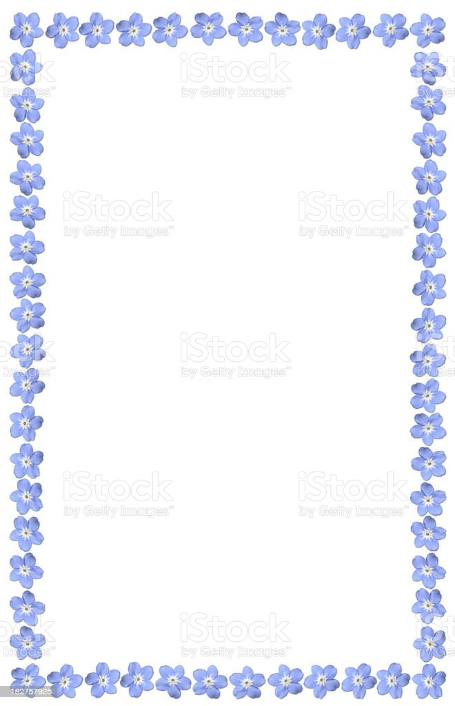 Forget Me Not - Frame stock photo