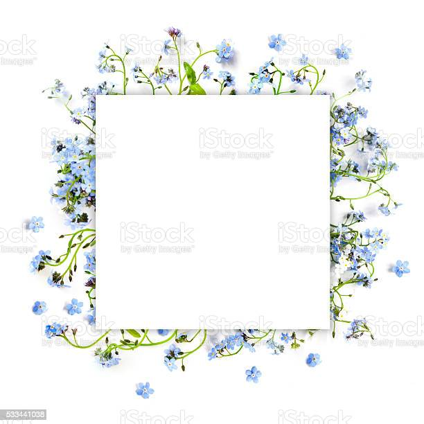 Forgetmenot blue forest flowers nature square background picture id533441038?b=1&k=6&m=533441038&s=612x612&h=6mhaprnfbb7bufdbvkkyylpqhdk d24x37yfsecb6ie=