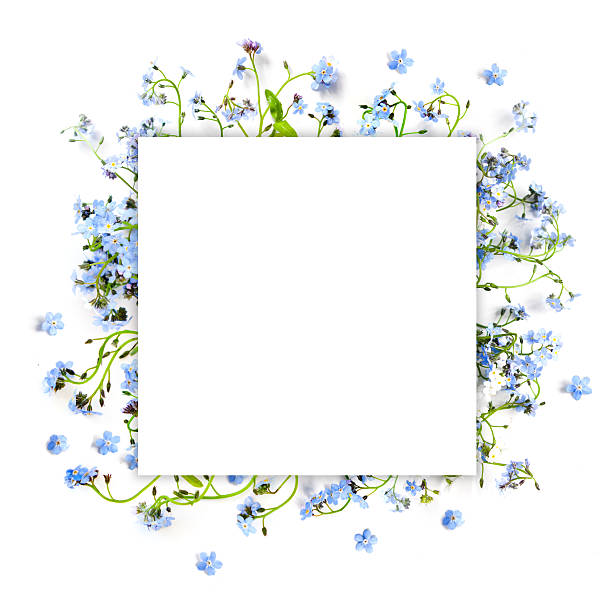 se não-me-blue floresta flores-fundo de natureza praça - miosótis - fotografias e filmes do acervo