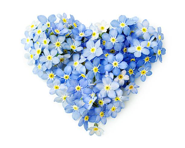 se não-me-flores em forma de um coração - miosótis - fotografias e filmes do acervo