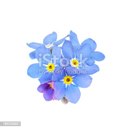 blue forget-me-not (myosotis) isolated on white