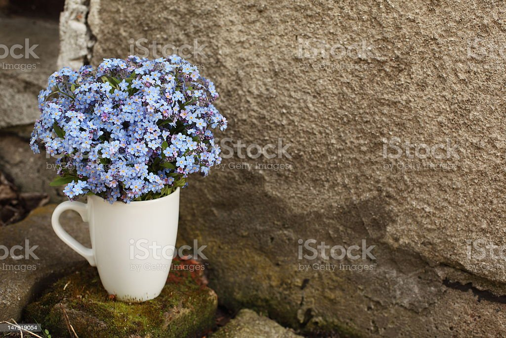 Forget-me-nots in a cap stock photo