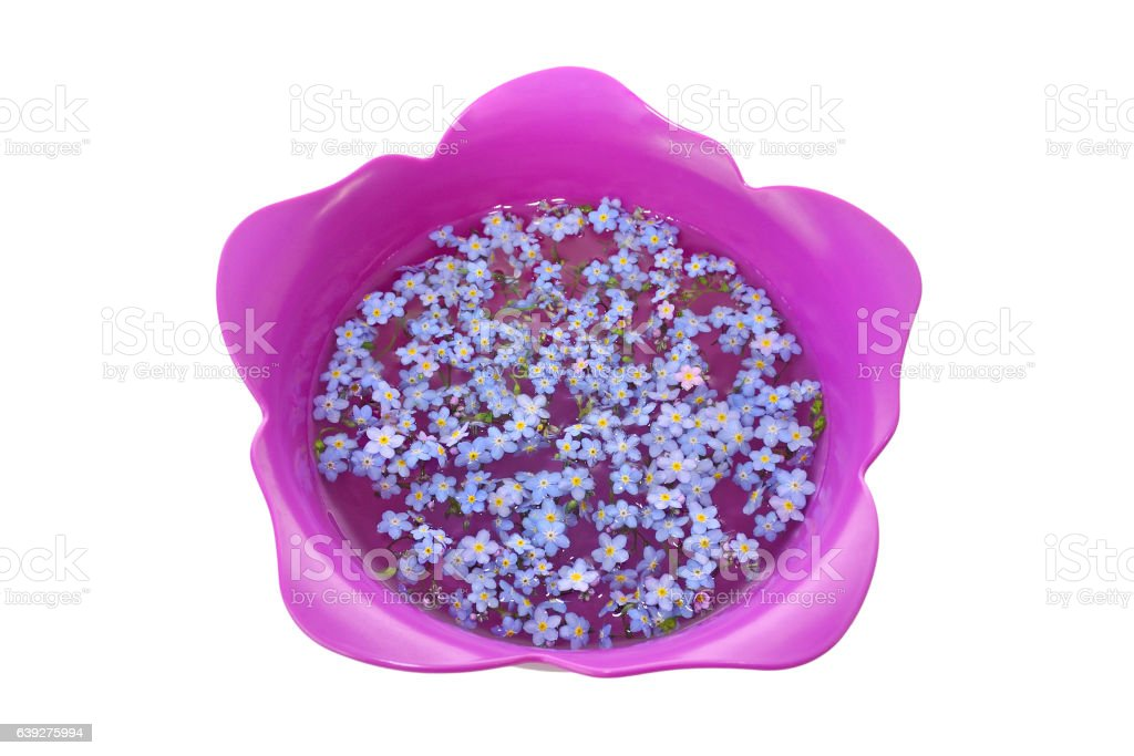 Forget-Me-Nots in Tulip Bowl stock photo