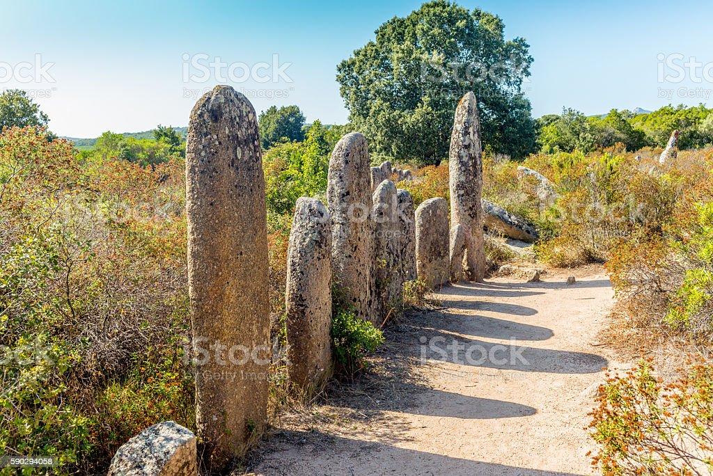 Forgotten prehistoric site in the Corsica hills - 1 royaltyfri bildbanksbilder