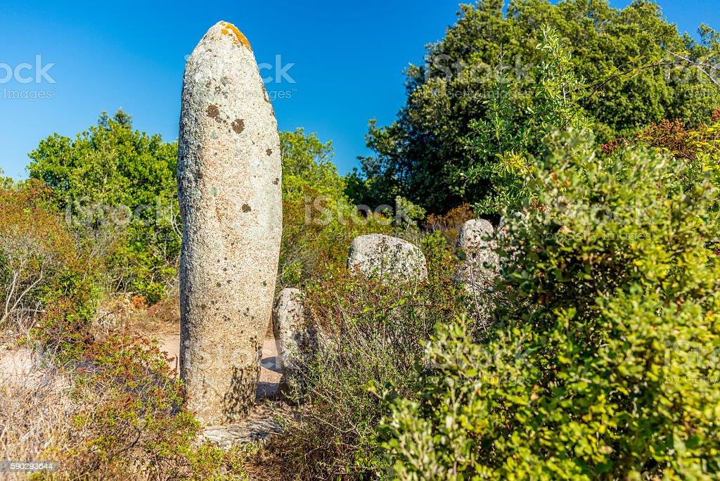 Forgotten prehistoric site in the Corsica hills - 7 royaltyfri bildbanksbilder