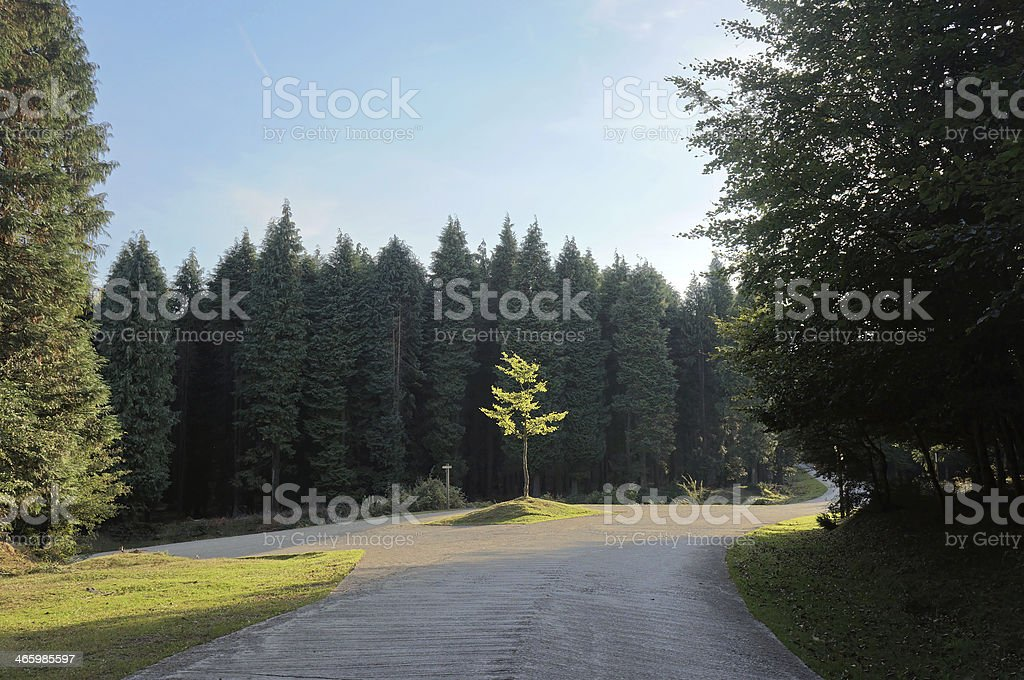 fork in county road stock photo