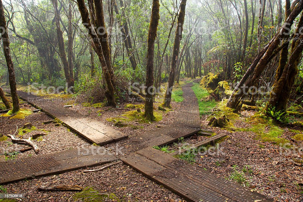 Fork in path through a forest stock photo