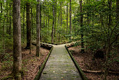 istock Fork in the road for major decision on wooden boardwalk in forest 1196533345