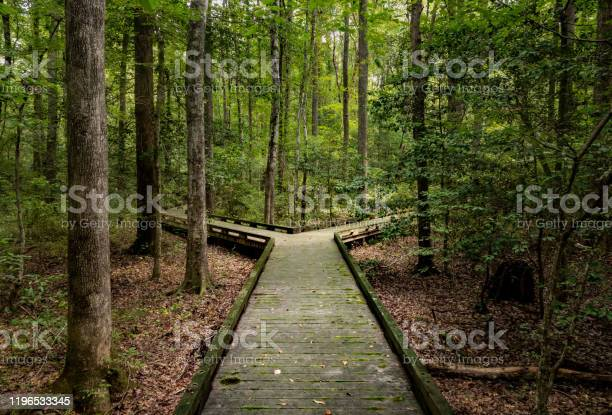 Photo of Fork in the road for major decision on wooden boardwalk in forest