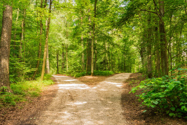 Forked roads right and left in green forest Crossroad two ways, choose the way fork in the road stock pictures, royalty-free photos & images