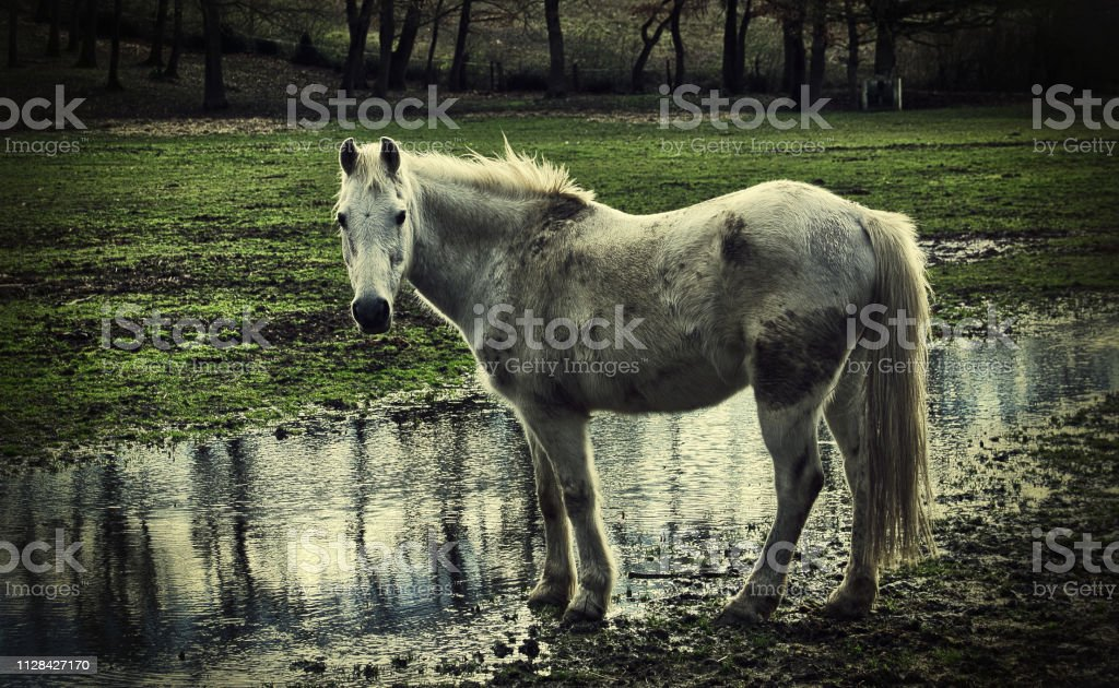 Forlorn dirty horse stock photo