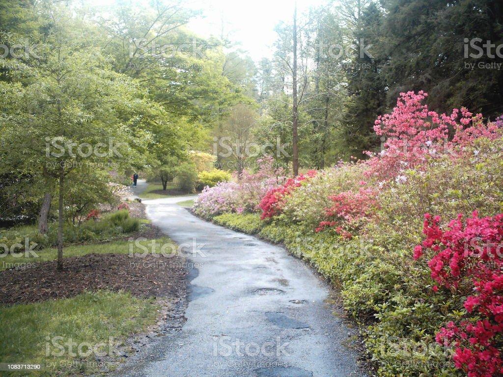 Formal Azalea Garden Pathway stock photo
