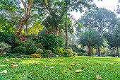 Formal Garden in Hong Kong park