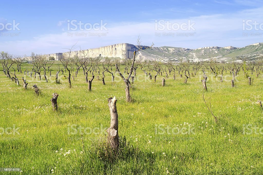 Former orchard royalty-free stock photo