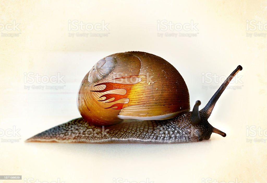 formula 1 snail royalty-free stock photo