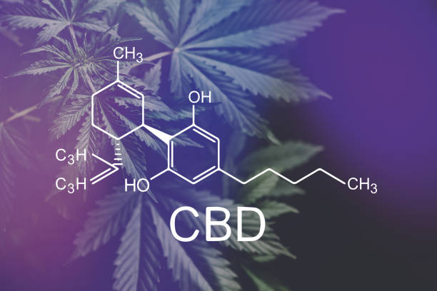 CBD formula cannabidiol. Hemp industry, Growing Marijuana, CBD and THC elements in Cannabis, despancery business. cannabinoids and health, medical marijuana, - foto stock