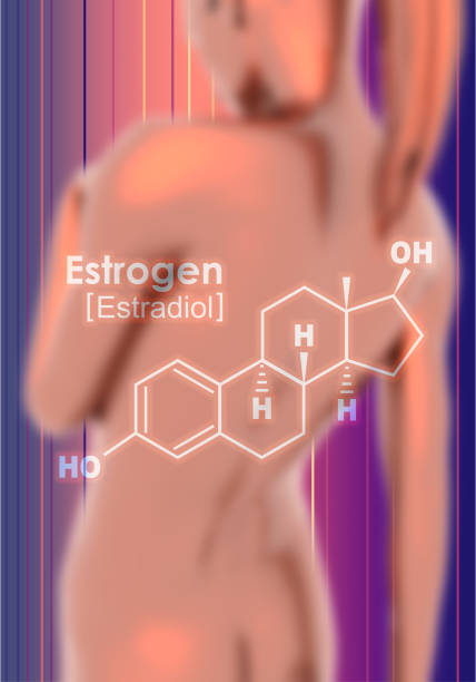Formula of hormone estrogen. Chemical molecular formula hormone estrogen. Infographics illustration. Woman body. 3D rendering oestrogen stock pictures, royalty-free photos & images