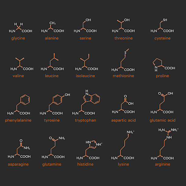 Formulae for amino acids Table showing the diagrammatic formulae and structure of a variety of amino acids showing the position of the amino and carboxylic acid groups within the organic compound formic acid stock pictures, royalty-free photos & images