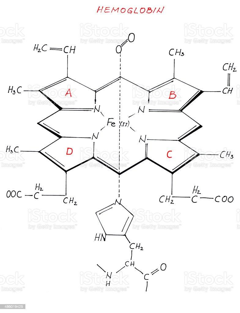 Formulae of a hemoglobin`s chemical chain stock photo