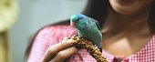 istock Forpus parrot bird on woman hand 1219735601