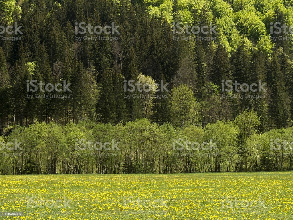 Forrest and meadow royalty-free stock photo