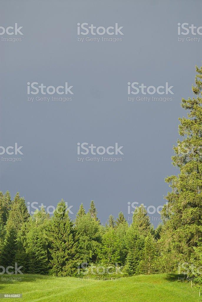Forrest Textfreiraum Lizenzfreies stock-foto