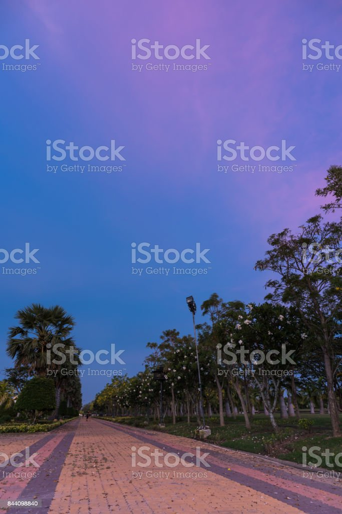 Forrest in Buddhamonthon is place for Buddhist Dharma with purple sky and sunset. stock photo