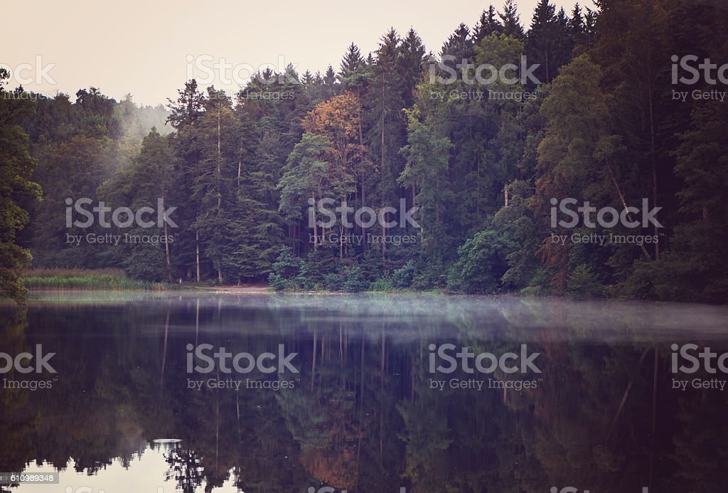 forrest view stock photo