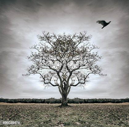 A lone tree looses it's leaves as well as a bird resting in it's branches. It is forsaken