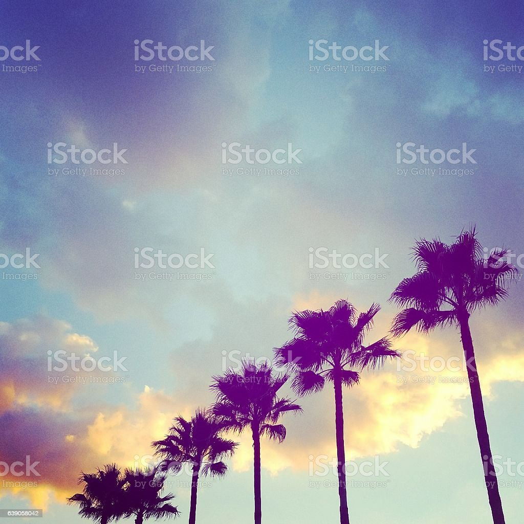 Fort Lauderdale Florida Palm Trees with Multicolored Sky at Sunset stock photo