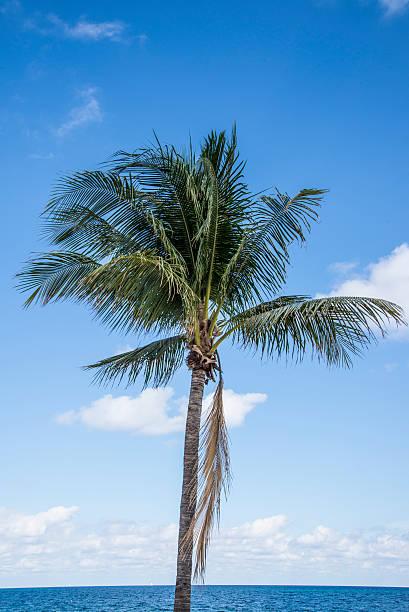 Fort Lauderdale palm trees ocean beach stock photo
