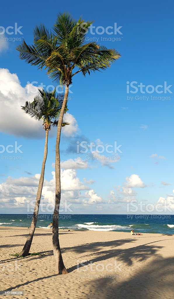 fort lauderdale tall palms royalty-free stock photo