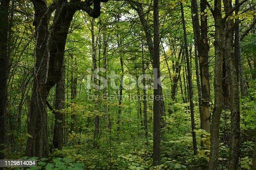 Forêt du Québec, Canada, au début de l'automne