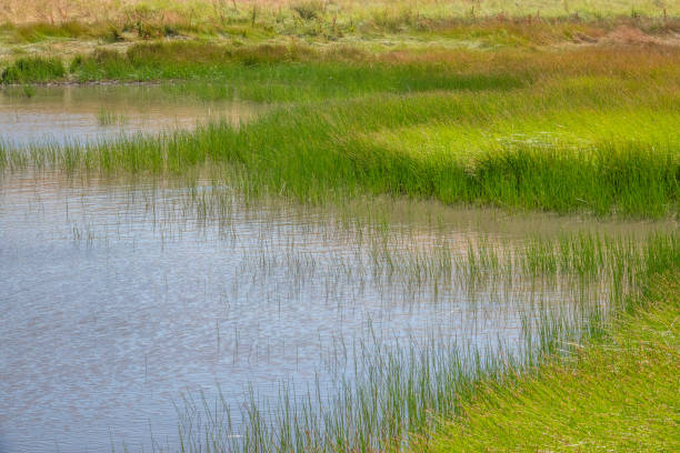 Fort Ord Vernal Pond stock photo