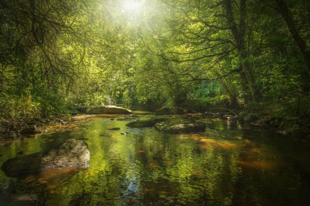 forêt - jardim do eden - fotografias e filmes do acervo