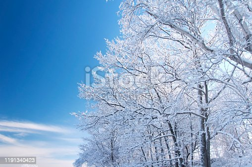 Snow covered trees at Fort Williams Park in portland Maine on a sunny blue sky day.