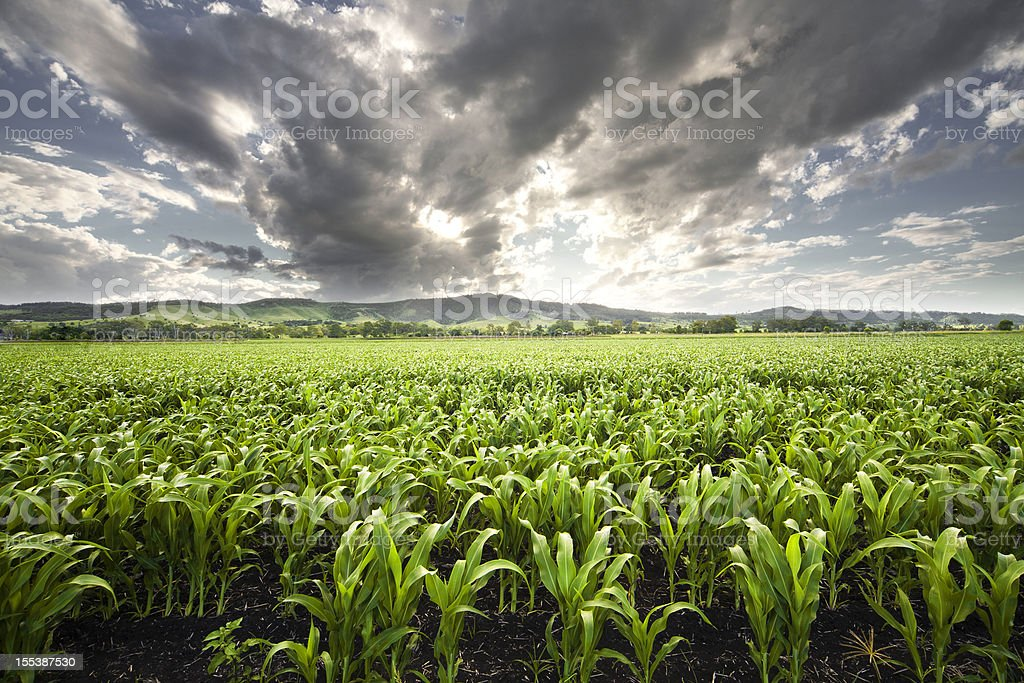 Forward view of field captures storm filling the sky above stock photo