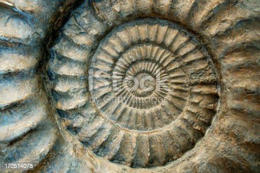 istock Fossil Ammonite Close-Up 172514078