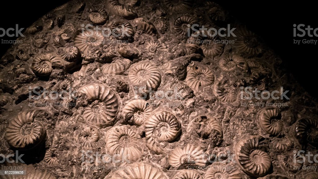Fossil & Ammonite for fuel energy stock photo