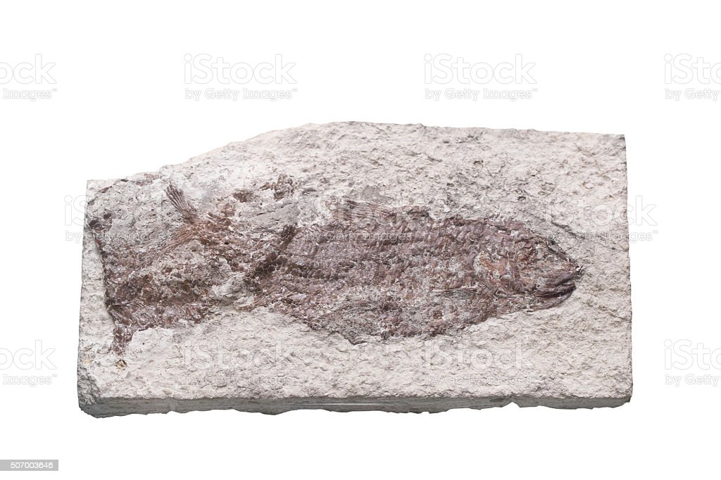Fossil Ammonite isolate background with clipping path stock photo