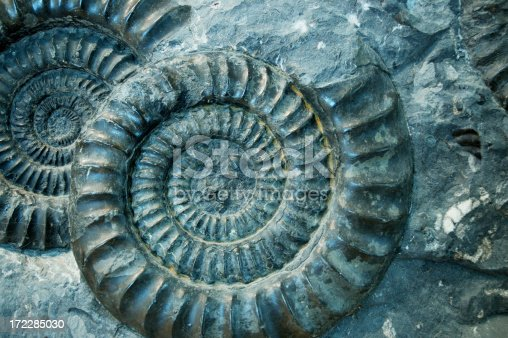istock Fossil Ammonite Rock 172285030