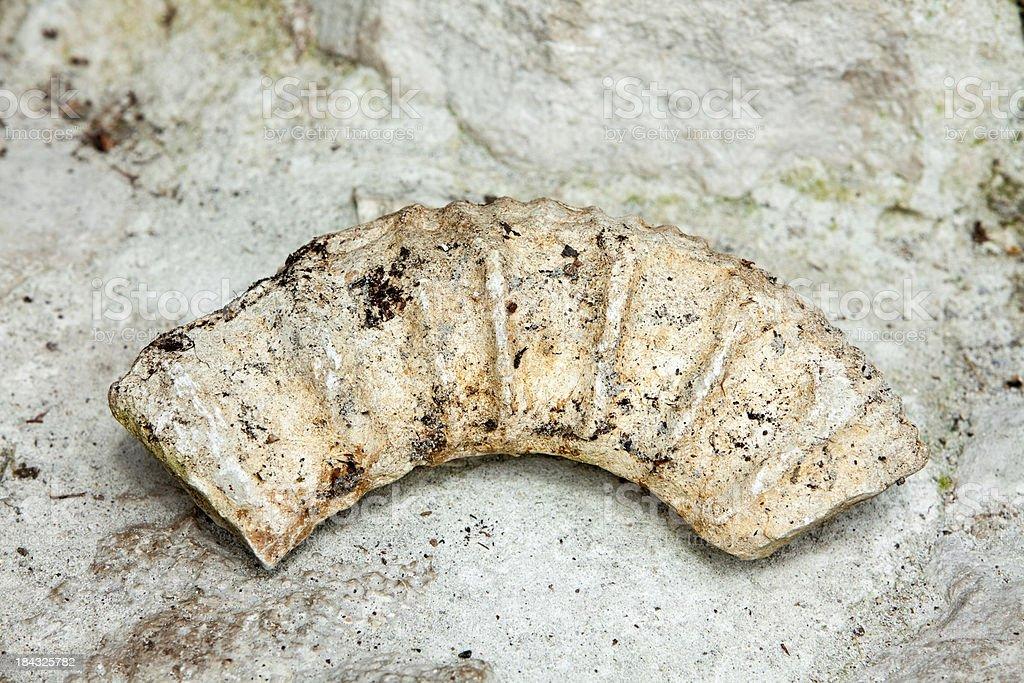 Fossil Ammonite XXXL royalty-free stock photo
