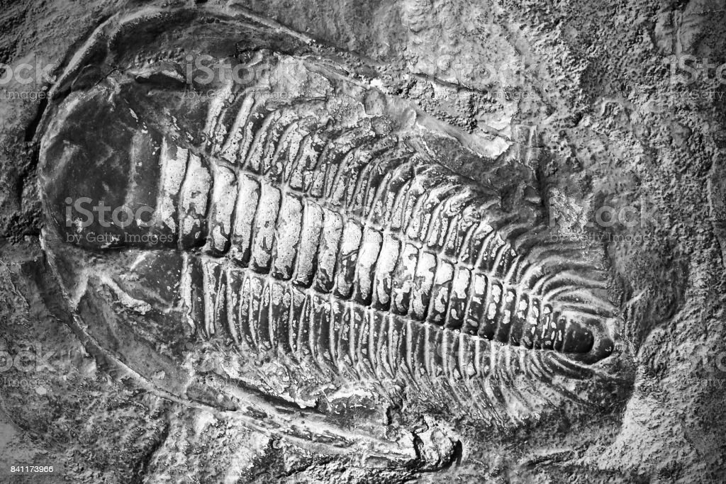 Fossil animal in ancient stone. stock photo